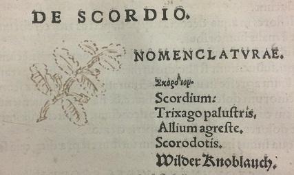 Germanders (uncoloured)