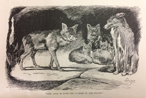The Jungle Book - illustration of the wolf pack